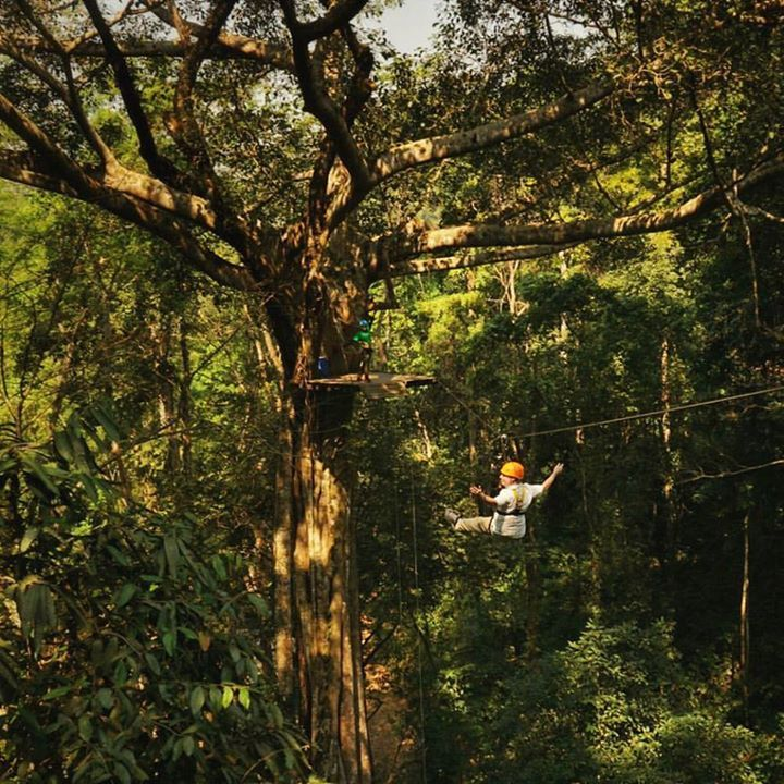 review flight of the gibbon chiang mai