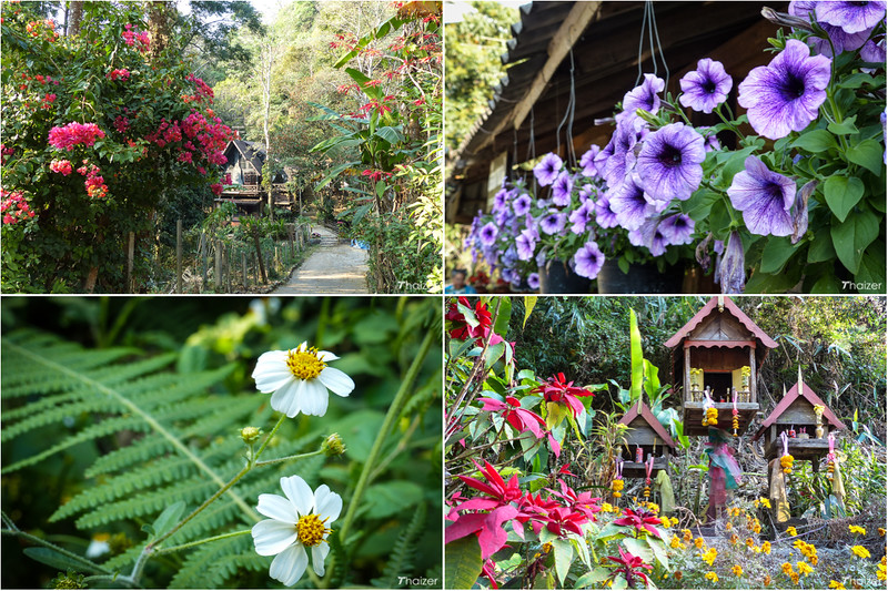 beautiful Mae Kampong