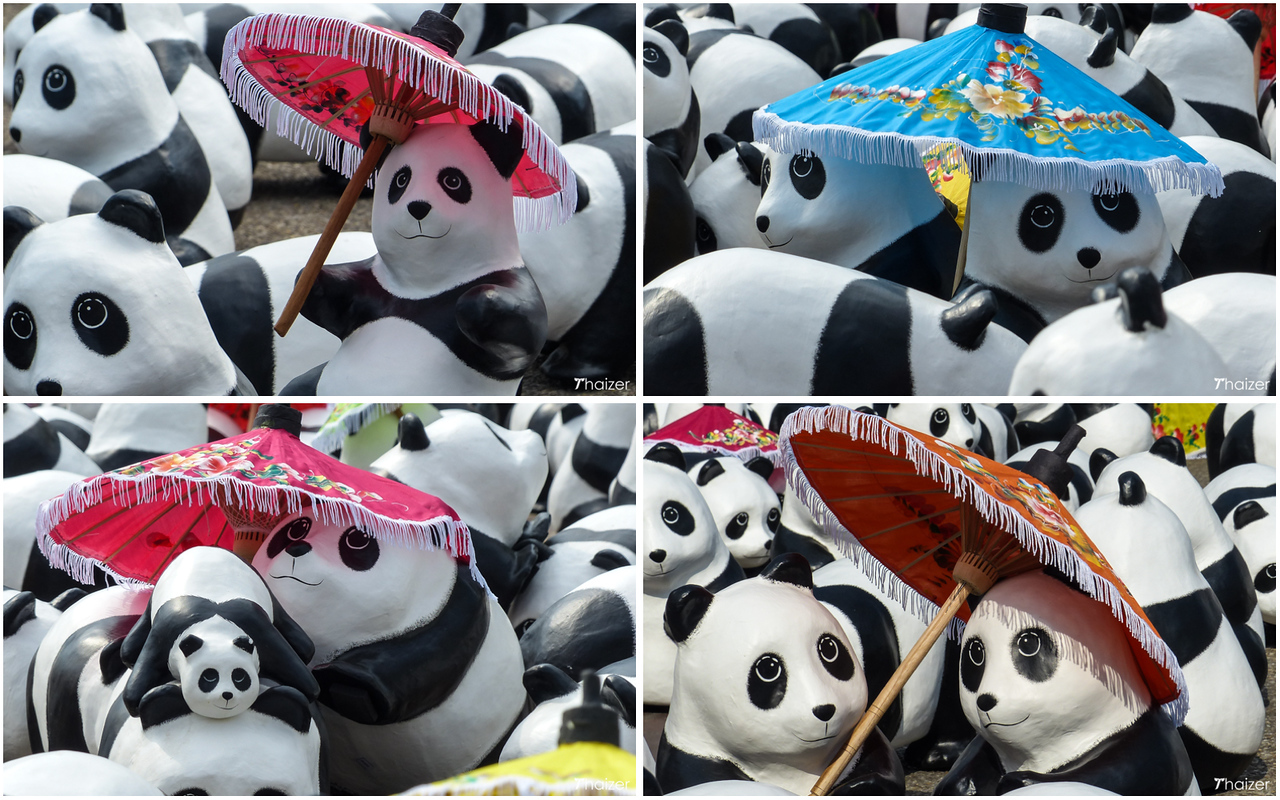 parasol pandas
