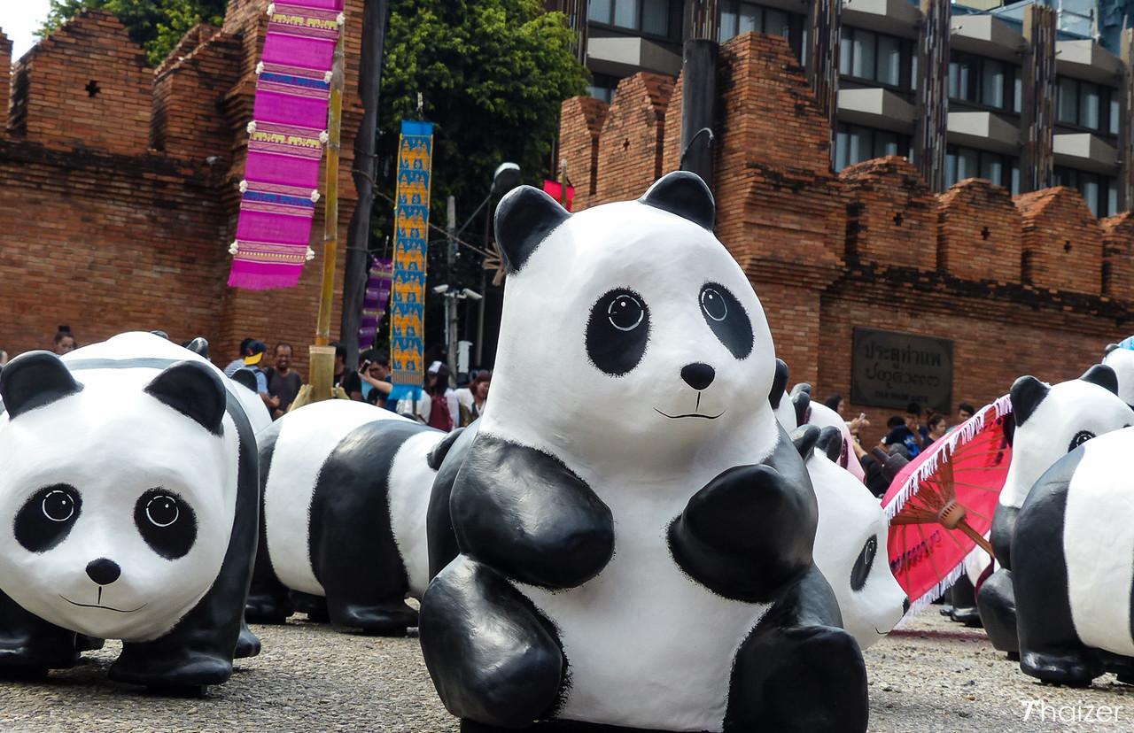 Thapae Gate panda