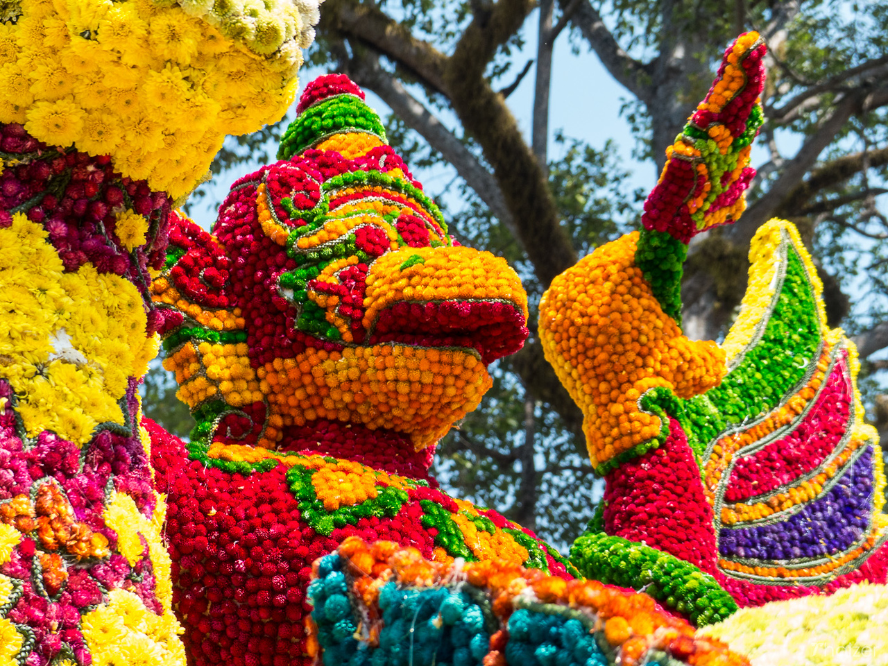 close-up view of the flowers and floats