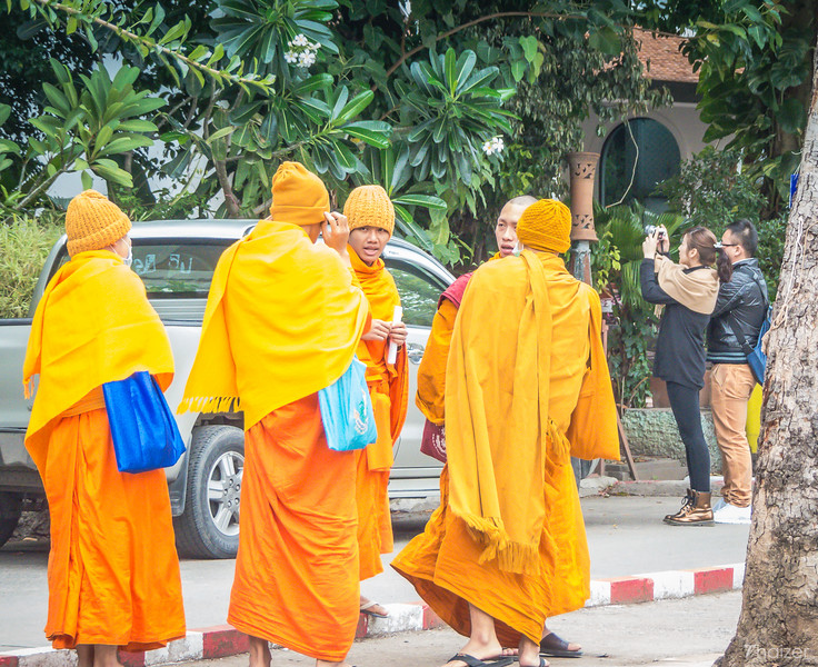 monks at Wat Chedi Luang in Chiang Mai wrap up against the cold